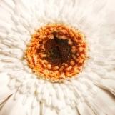 Sidetable Flower